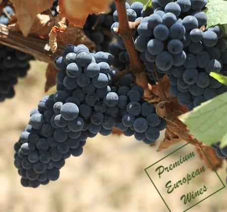 Premium European Wines Inc Logo - Grapes and watermark